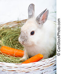 rabbit with carrot - Beautiful rabbit with carrot on the hay