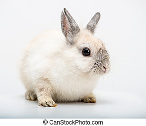 white rabbit - White rabbit on white background