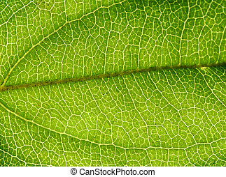 Rainforest Background 2 - Background of backlit ribbed leaf...