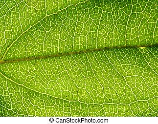 Rainforest Background 2 - Background of backlit ribbed leaf...