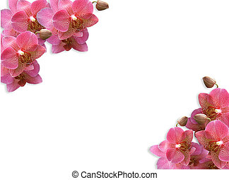 Orchids corners Border Pink - Illustration and image...