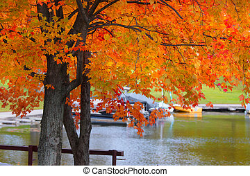 Autumn  tree by the lake