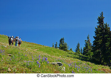 Hiking in the mountains - group of active people, hiking in...