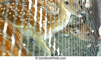 Beautiful Deer bambi
