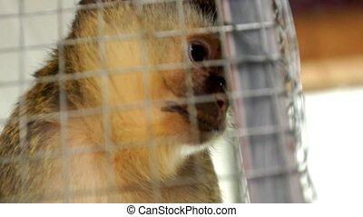 Monkey - Cute monkey in cave