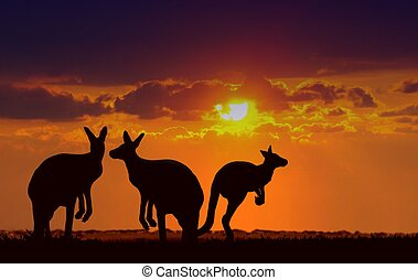 Kangaroos Under Sunset