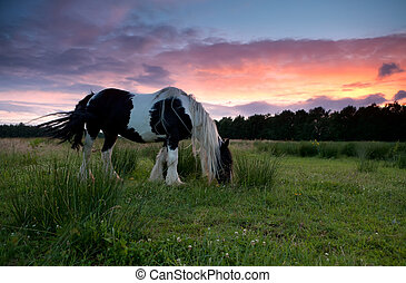 horse grazing on pasture at sunset