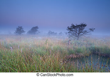 fog over swamp at sunrise