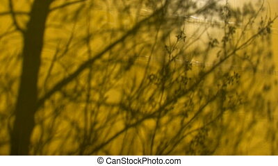 Tree shadow on yellow background - Tree shadow branches...