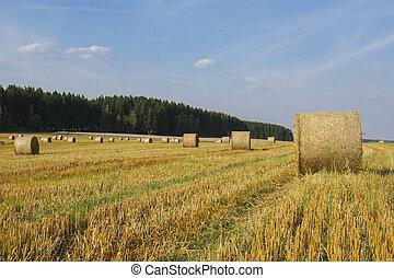 trigo, cosecha, paisaje