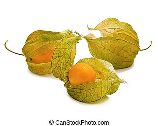 ground-cherry - tree cape gooseberry over the white...
