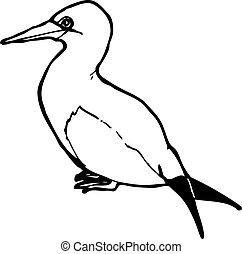 sea bird illustration
