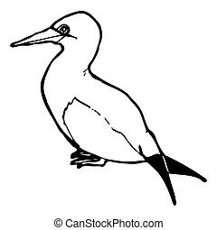 sea bird illustration