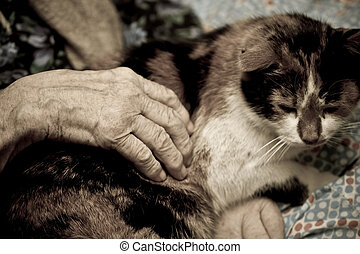 old age - hand of aged woman holding domestic cat
