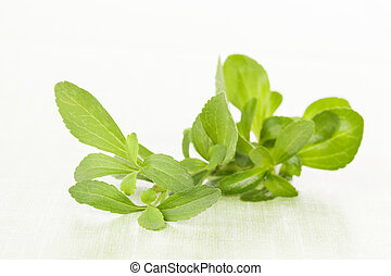 Steva sugar leaf - Green fresh stevia sugar leaf isolated on...