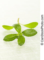 Stevia on green - Stevia leaves isolated on green background...