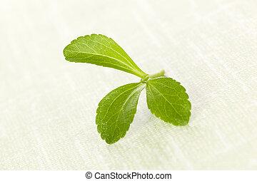 Stevia sugarl leaf - Fresh green stevia sugar leaf isolated...