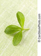 Stevia leaf - Fresh stevia leaf isolated on green background...
