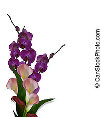 Orchids and Calla Lilies isolated - Image composition of...
