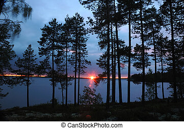 Beautiful sunset in pine forest,Karelia, Engozero...