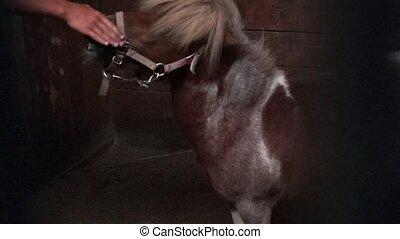 Cute pony horse