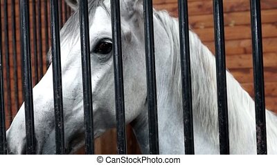 Horse behind Fence