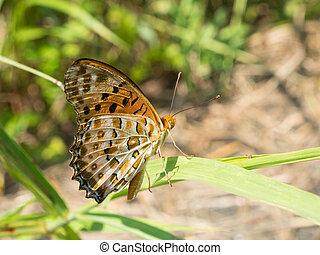 Brush-footed butterfly - This is a photo of the brush-footed...