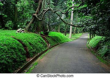 Road on botanical garden - Background - Road on Botanical...