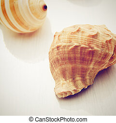 sea shell with retro filter effect