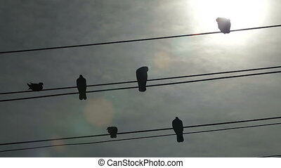 Birds On a Wire - Birds lined up on a telephone lines...