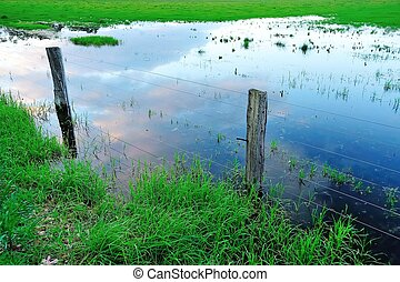 wet feet - fence in flooded paddock with lush grass