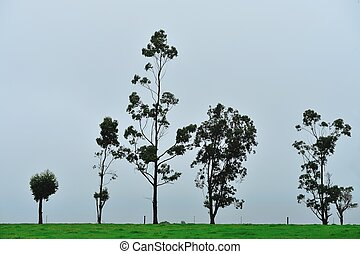 together exposed - line of trees on ridge under leaden sky