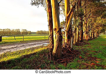 wet late lines - line of trees next to wet gravel road in...