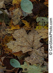 fall leaves on forest floor - A bunch of muted colorful fall...