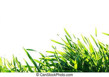 lawn isolated on white - Beautiful green lawn isolated on...
