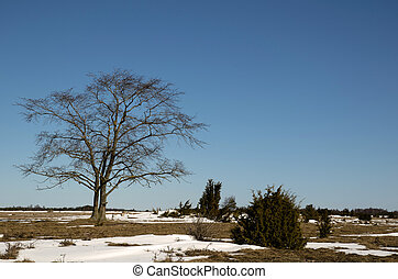 Lone tree, wych elm, in a great plain landscape at early...