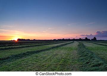 rows of hay at sunrise - green rows of hay at summer...
