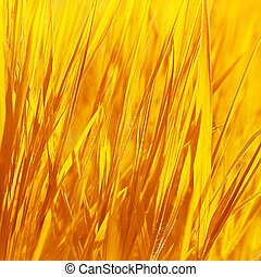 Dry yellow grass background, autumn nature, abstract natural...