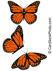 Monarch butterfly - A set of three monarch butterflies