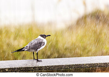 seagull in heavy rain stands on the pier