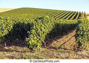 rioja vineyards - vineyards with denomination of origin...
