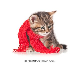 Cute kitten - Sick kitten with a scarf tied round a neck...