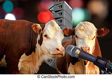Two cows performing - Two cows singing or talking into...