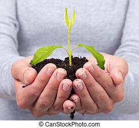 mulher, mãos, verde, planta