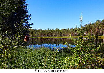 Forest lake - Blue Lake in the north woods at sunny day