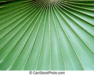 Converging lines on a Palm Leaf - Palm leaf