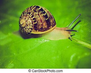 Retro look Snail slug - Vintage looking Snail slug on a...