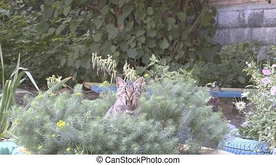 cat - Cat sitting in the flowers and yawns