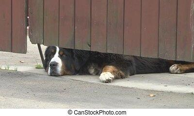 dog - Patrol dog