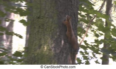 squirrels - Squirrel plays hide and seek